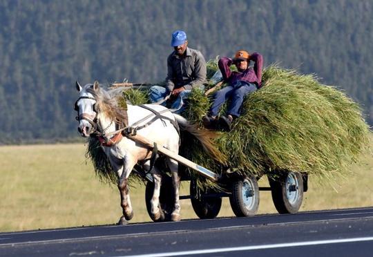 Rayonlarda ot biçini başlandı – Qiymətlər necədi? (Video)