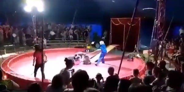 Sirkdə dəhşət: tamaşa zamanı ayı təlimçiyə hücum çəkdi (VİDEO)