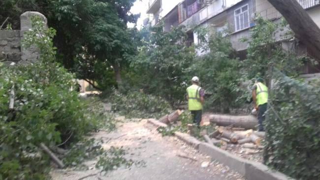 Xətai rayonunda ağacları belə məhv edirlər – FOTOLAR