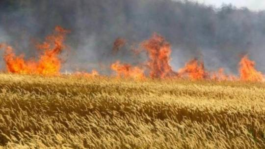 Göyçayda taxıl sahəsində GÜCLÜ YANĞIN: Yüksək gərginlikli elektrik xətləri üçün TƏHLÜKƏ