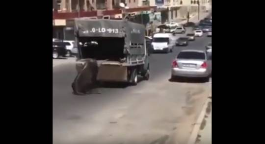 Yasamalda insan vəhşiliyi: İnəyi maşına bağlayıb küçədə sürüdülər – Video