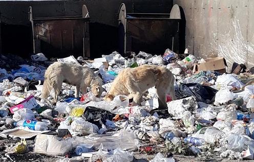 Zibil boğaza qalxıb, icra günahı əhalidə görür… – Foto